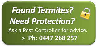 Termite Protection Brisbane
