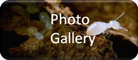 Termite Protection Services Gallery