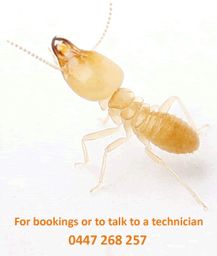 For bookings or talk to a technician call 0447 268 257